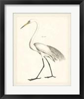 Framed Vintage Heron II