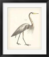 Framed Vintage Heron I