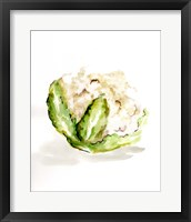 Veggie Sketch plain VI-Cauliflower Framed Print