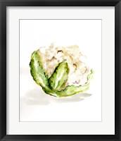 Framed Veggie Sketch plain VI-Cauliflower
