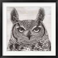 Framed Portrait of an Owl