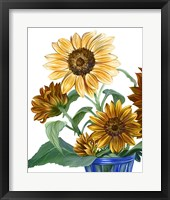 Framed China Sunflowers II
