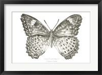 Framed Butterfly Sketch landscape I