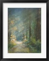 Framed Sun Soaked Redwoods
