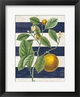 Framed Classic Citrus VI Navy Shiplap NW