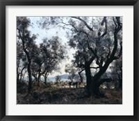 Framed Olive Trees around Cap Martin, 1891