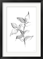 Wash Leaf II Framed Print