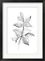 Wash Leaf I Framed Print