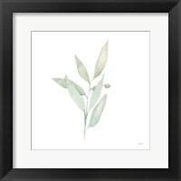 Framed Sage II