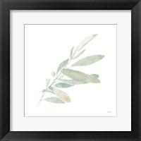 Framed Sage I
