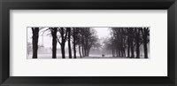 Framed Avenue of Trees BW