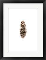 Framed Pine Cone I