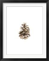 Framed Pine Cone II