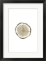 Framed Tree Slice I