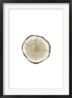Framed Tree Slice I