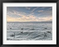 Framed Lake Tahoe Geese