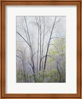 Framed Early Spring