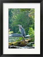 Framed Heron on Lake George