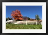 Framed Autmn Pasture