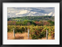 Framed Wine Country Beneath Cloudscape