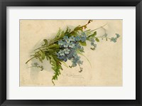 Framed Forget-Me-Not