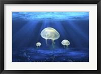 Framed Jelly Fish 2