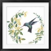 Framed Male Broad Billed Hummingbird