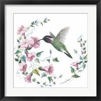 Framed Male Costas Hummingbird