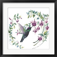 Framed Male Magnificent Hummingbird