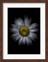 Framed Backyard Flowers 13