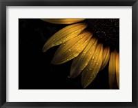 Framed Backyard Flowers 28 Sunflower