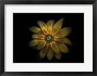 Framed Backyard Flowers 34