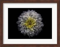 Framed Backyard Flowers 46