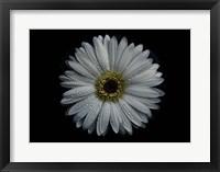 Framed Backyard Flowers 71