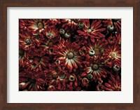 Framed Backyard Flowers 88