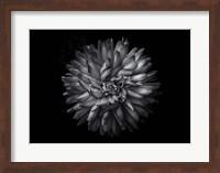 Framed Backyard Flowers In Black And White 20