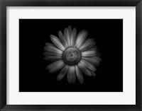 Framed Backyard Flowers In Black And White 31