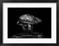 Framed Toadstools On A Trail No 1