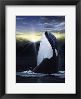 Framed Orca Sunset