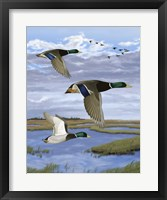 Framed Salt Marsh Mallards