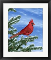 Framed Winter Cardinal