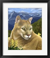 Framed Rockies Mountain Lion