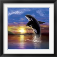 Framed Orca Sunrise