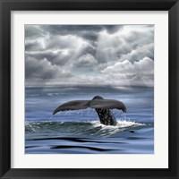 Framed Whale Fluke