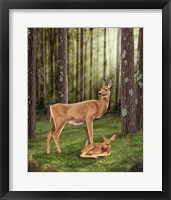 Framed Doe and Fawn