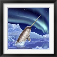 Framed Narwhal and Northern Lights
