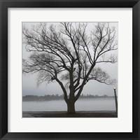 Framed Tree In Fog II