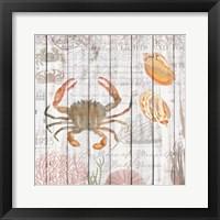 Framed Crabs on Driftwood Panel