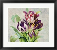 Framed Bouquet Tulips I
