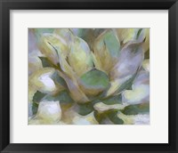 Framed Agave Forms II